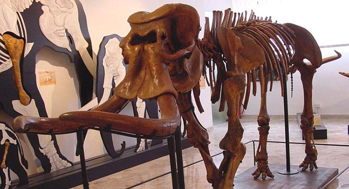 """Museo di Paleontologia """"Gemmellaro"""""""