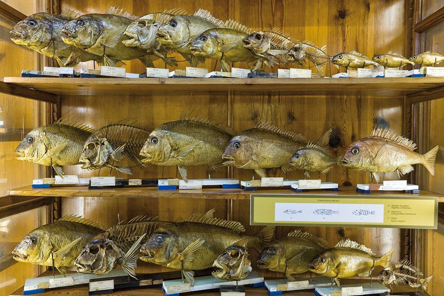Immagine Museo di Zoologia