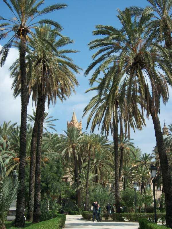 Immagine palme